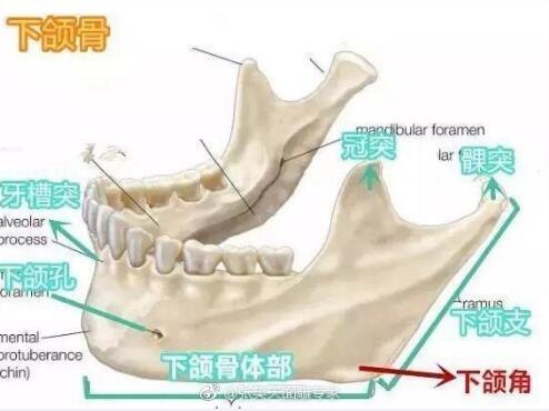 下颌角骨骼